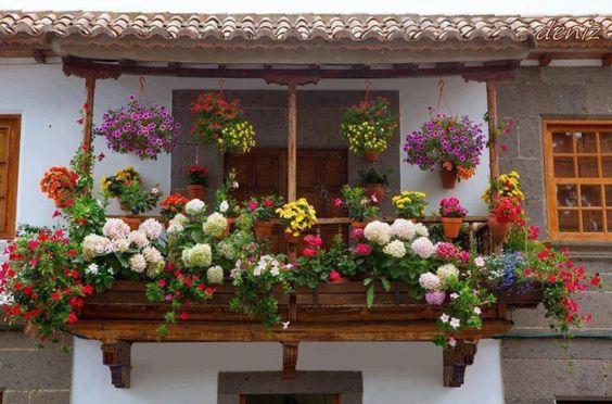 @gardening #gardening #flower