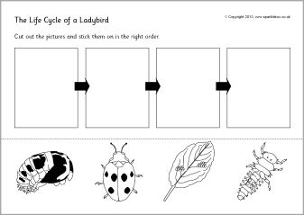 life cycle of a ladybird ladybug cut and stick sb9618 sparklebox insects bugs and more. Black Bedroom Furniture Sets. Home Design Ideas