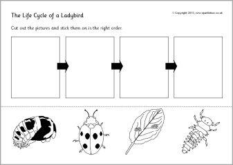 Life cycle of a ladybird/ladybug cut and stick (SB9618 ...
