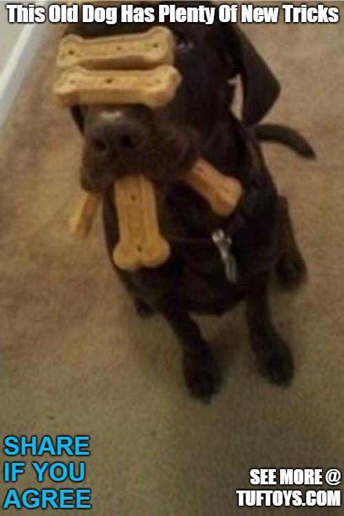 Funny Dog Memes Part 5 Funny Dog Memes Funny Animal Jokes Dog Memes