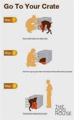 Dog Training Kit Hunting Dog Training 101 Pdf Electronic Dog