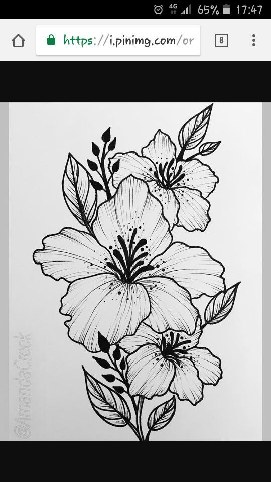Pin By Aleksej Skrypnik On Cvety Pinterest Dibujos De Flores