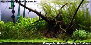 Plantado de 182L de Gustavo Morais