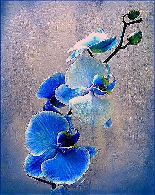 20x Dark purple Garden Artificial Plant Orchid Dendrobium Flower Head Craft