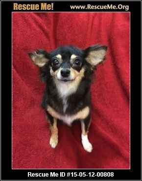 Rescue Me ID: 15-05-12-00808Hayden 6 lbs (female)  Chihuahua Mix  Age: Young Adult  Compatibility:Good w/ Most Dogs, Good w/ Most Cats, Good w/ Kids and Adults Personality:Average Energy, Average Temperament Health:Spayed, Vaccinations Current  Haden was rescued out of a high kill shelter in L.A. She is a purebred long haired Chihuahua, just adorable and sweet. If interested in meeting Hayden please contact Tee 310-490-3337 or tnt718@aol.com   Animal Location…