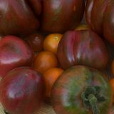 Which tomato varieties are good for growing in containers?