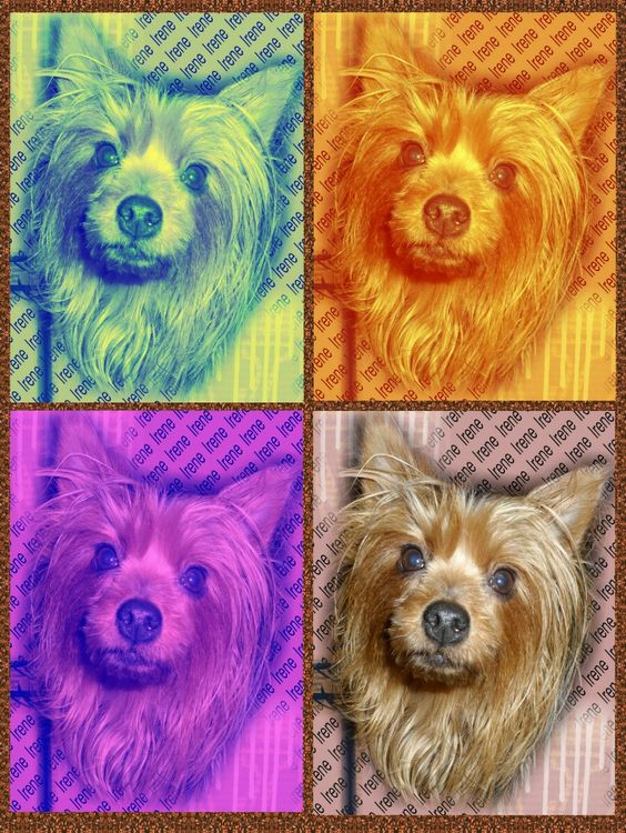 I took a picture of my nieces dog and made this with Photoshop. I'm going to have it printed on canvas for Xmas.