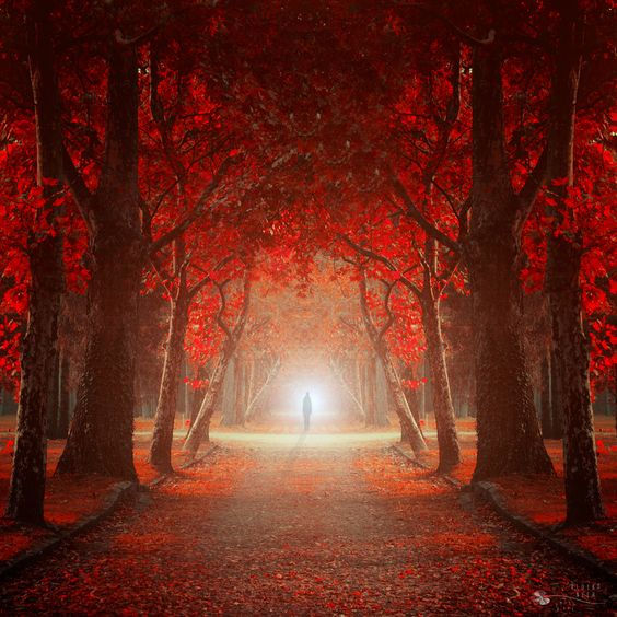 Let me in by Ildiko Neer, via 500px