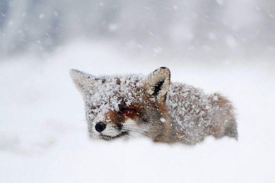 Winter by Roeselien Raimond (http://www.roeselienraimond.com/)