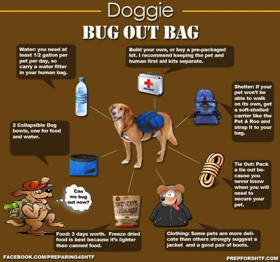 Doggie Bug out Bag. Pets need the same things we do: food, shelter, water. Make sure Fido's prepared. We may think when the SHTF we'll just cut 'em loose, but who has the heart to do that!
