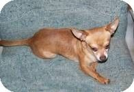 Spanaway, WA - Chihuahua. Meet Charlie a Dog for Adoption.