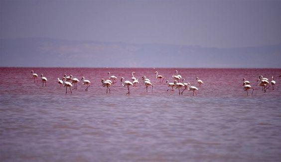 Кроваво-красная вода озера Туз