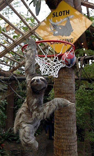 Super Sloth! :) how cute!