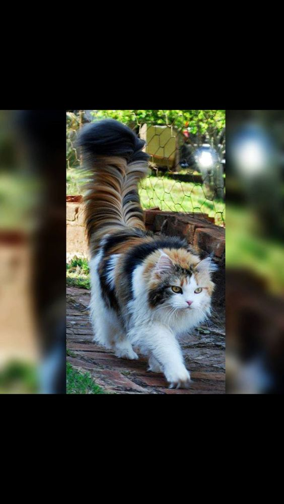 Look at that tail