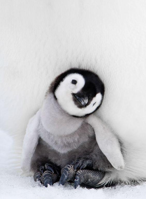18 photos sublimes dans l'intimité du manchot, un animal qui gagne à être connu | Buzzly: