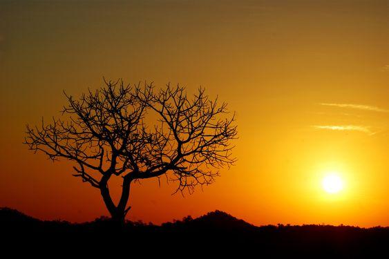Desert sunset: