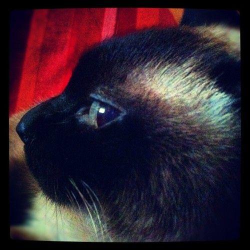 My cat (Tomada con Instagram)