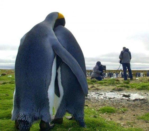 This penguin doesn't even want to talk about it right now, OK?!?!