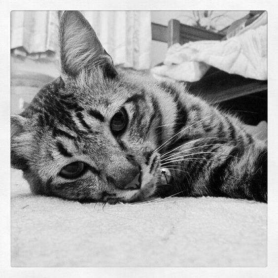 #cat #photograph http://t.co/TGvTLQ0C