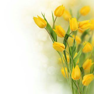 احسن الصور يمكن الكتابه عليها بطاقات فارغة للكتابة عليها خلفيات فارغة للكتابة عليها اشكال جميلة للكتابة عليها Flower Places Flower Background Wallpaper Flowers