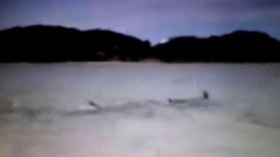 Cachorro nadando com golfinhos.