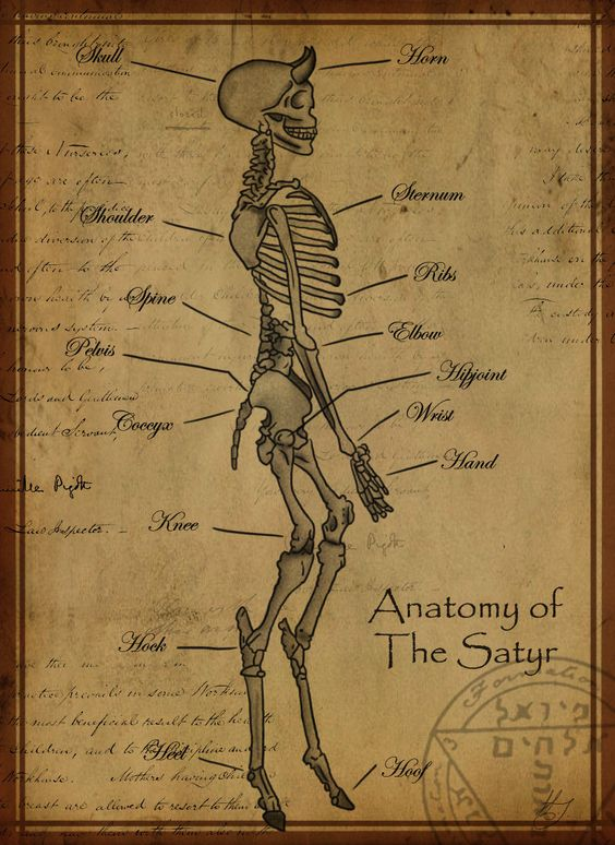 """Anatomy of The Satyr"" by Shadowglove on DeviantArt"