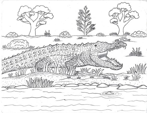 Crocodile Coloring Pages Free Printable Colouring For Toddlers Saltwater Online To Print Baby Adults Page Sheet Cartoon Robins Great Salt Water Dragon Bible Di 2020