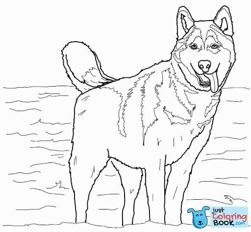 Husky Dog Pictures To Print