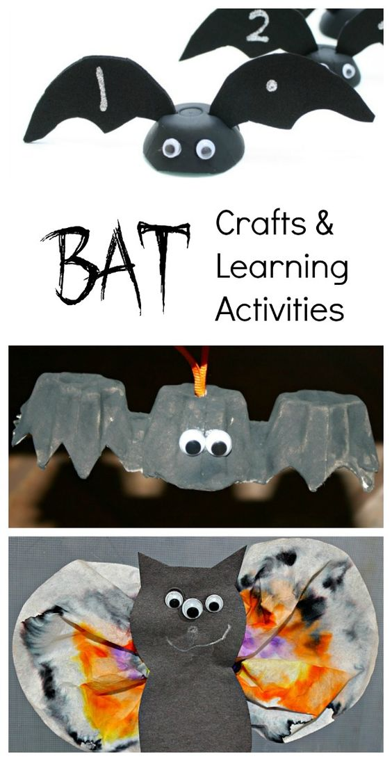 Activities for Kids About Bats and Echolocation | Synonym