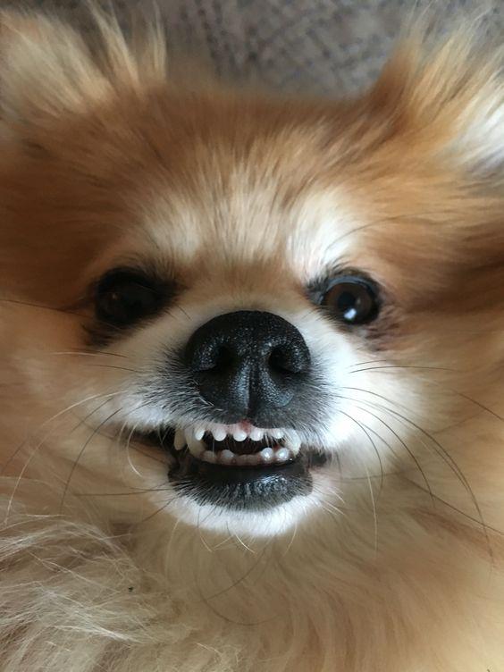 Beautiful teeth Layla