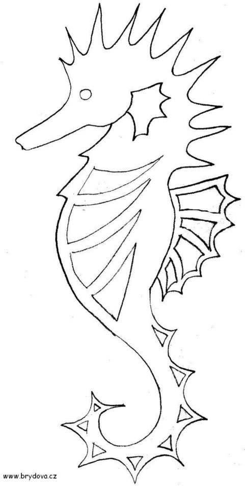 mořský koník: