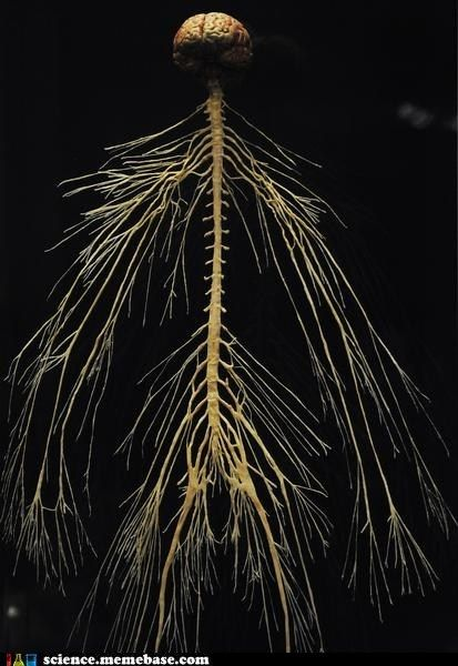 Human brain and nervous system. It's like the most beautiful tree...: