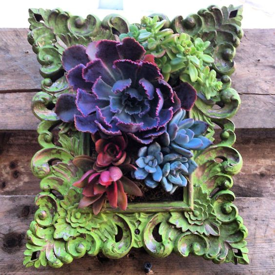 Framed Hanging Succulent Garden Ready To Hang