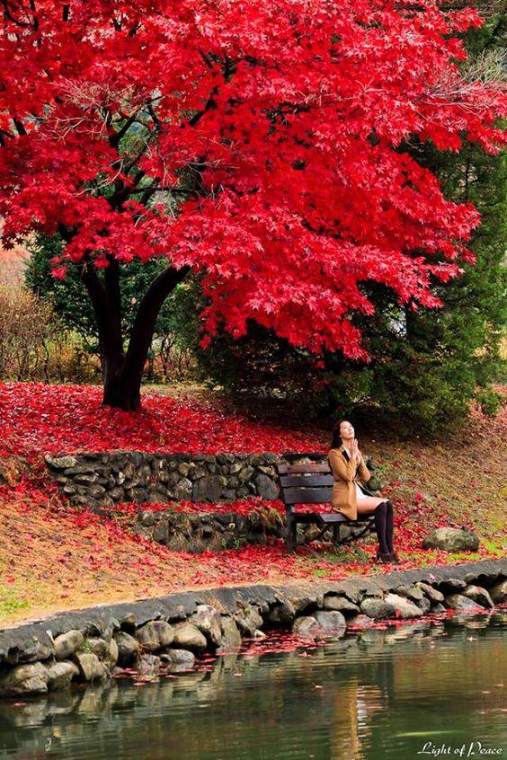 El otoño en Corea del Sur.(full color)  :-)