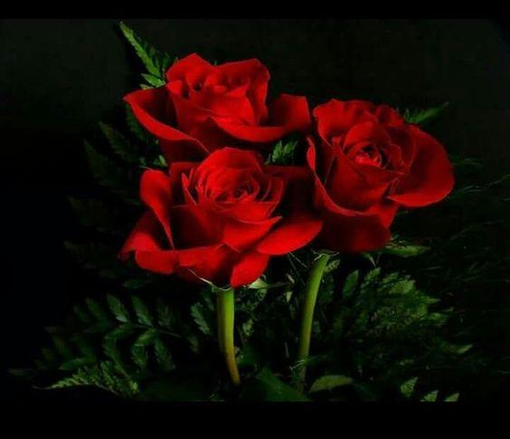 Pin De Cristina Solis En Mis Rosas Rosa Roja Rosas Fondo De Pantalla Flores Bonitas