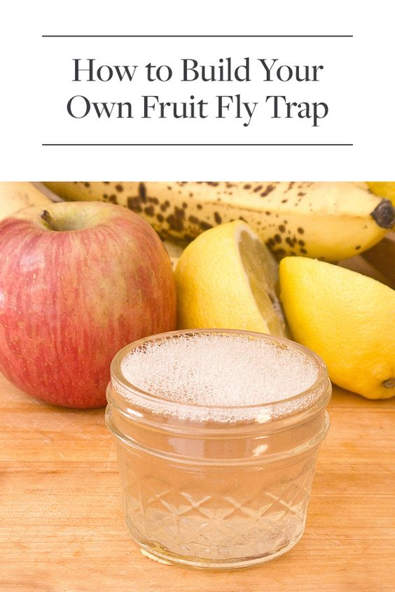 diy fruit fly trap healthy fruits for heart