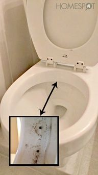 How to keep a toilet clean (much longer)   -1/4 Cup of Baking Soda   -1/2 Cup of Vinegar   -2 Cups of Hot Water