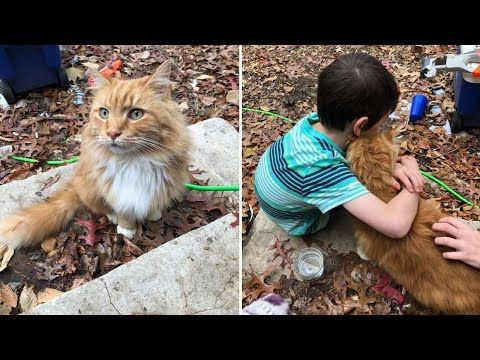 A Cat Appeared On Little Boy Who Broken Heart After His Cat Passed