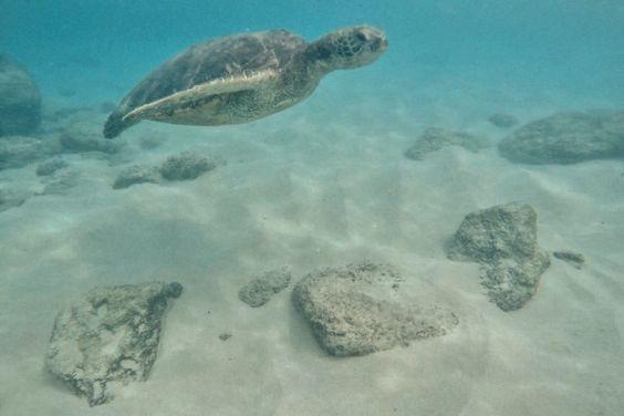 sea turtle!!