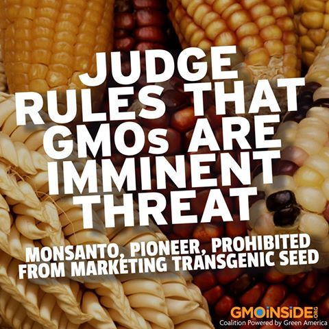 BREAKING: Judge In Mexico Rules That GMOs Are Imminent Threat! More Here: https://www.facebook.com/GmoInside:
