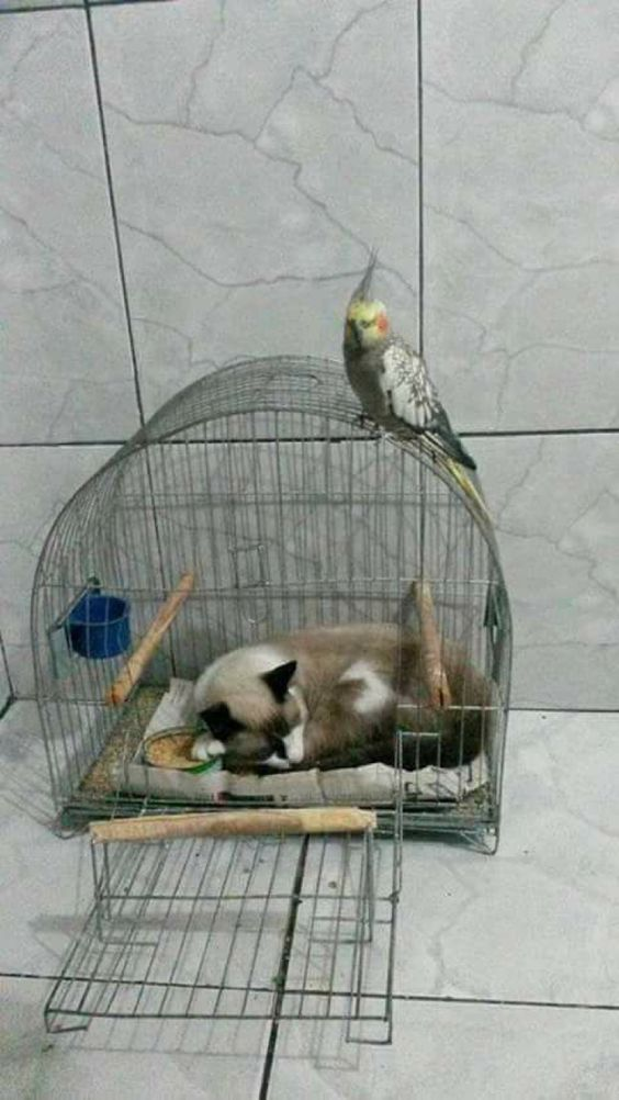 AStuce soigner sont chat naturelle A2e4f7db5e44bf93cad33ef221d00de2