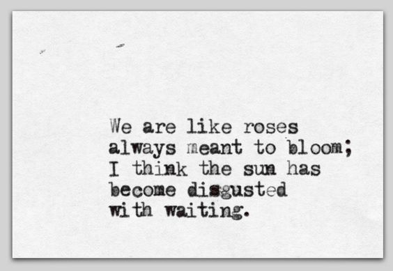 We are like roses