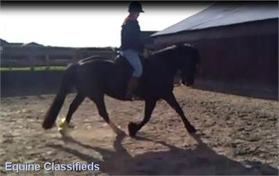 6yrs Welsh X - Project/Broodmare/Companion Horse for sale http://www.lardidar.co.uk/Horse/projectbroodmarecompanion-horse-for-sale-listing-142.aspx#.Uj21bFOAUfQ