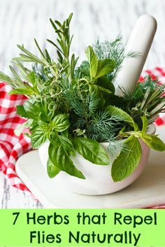 7 Herbs that Repel Flies http://tlc.howstuffworks.com/home/herbs-deter-flies-naturally.htm