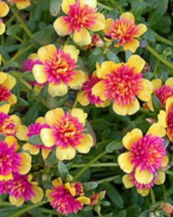 hot weather flowers sunny gardening pinterest