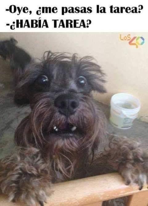 Pin De Valeria Hoff En Memes Mascotas Tiernas Las Tareas Mascotas
