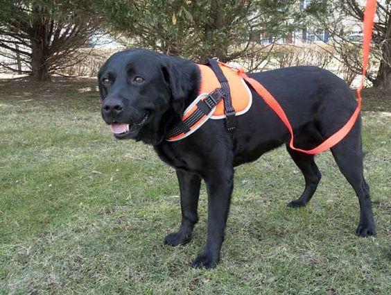 Iconic Pet's Dog Harness-Orange-Reflective, Adjustable, and Padded