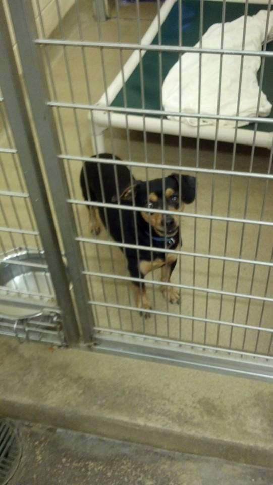 """WV...SUPER URGENT!!! PLEASE RESCUE/FOSTER/ADOPT ASAP!!!! MANY DOGS AND CATS IN NEED OF HOMES AT THE MERCER COUNTY ANIMAL SHELTER IN , PRINCETON, WV.... CLICK HERE TO SEE PICS>>>> https://www.facebook.com/media/set/?set=a.277275742381743.57344.277271479048836&type=3 Pictured: """"DARWIN (sweetheart)"""