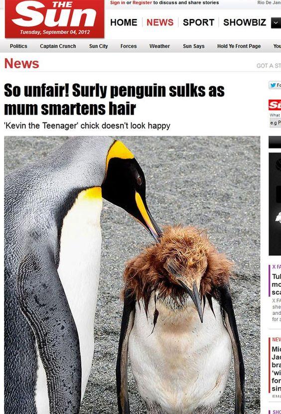 Pinguim punk!   Foto: Reprodução/The Sun