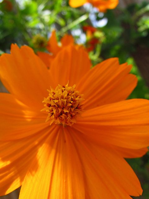 orange flower by cali165, via Flickr